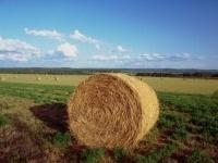 Settore agricolo: il Pil cala dello 0,5%