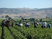 Il Pil dell'agricoltura cresce del 4,9%