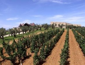 Architettura del vino: Ca' Marcanda a Bolgheri